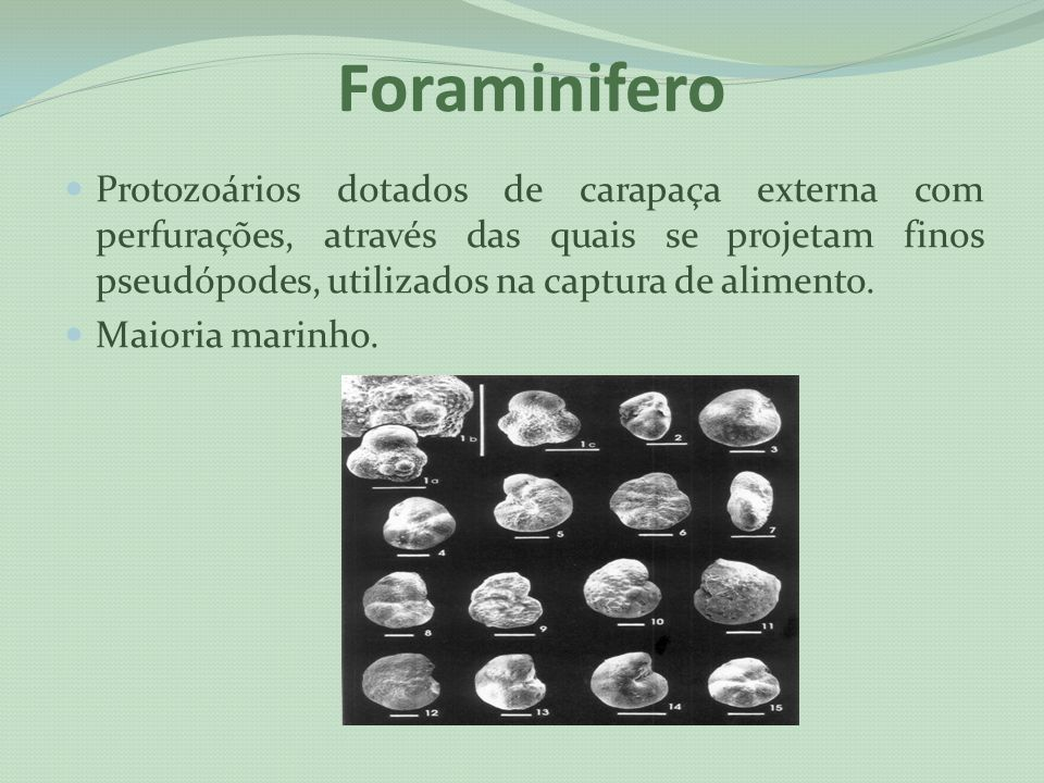 Foraminifero