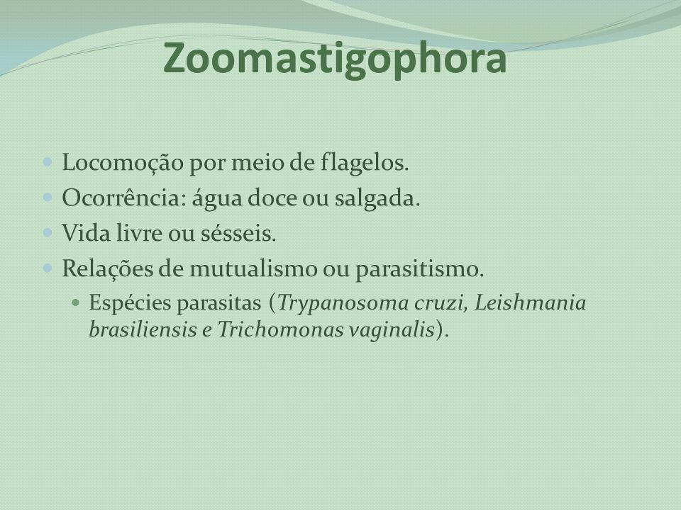 Zoomastigophora Locomoção por meio de flagelos.