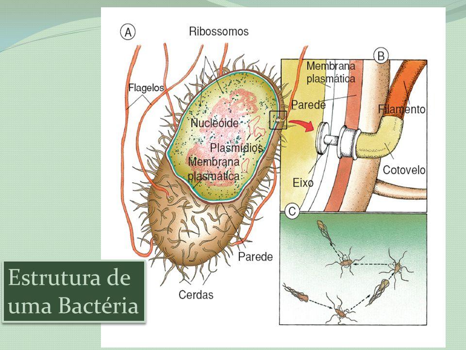 Estrutura de uma Bactéria
