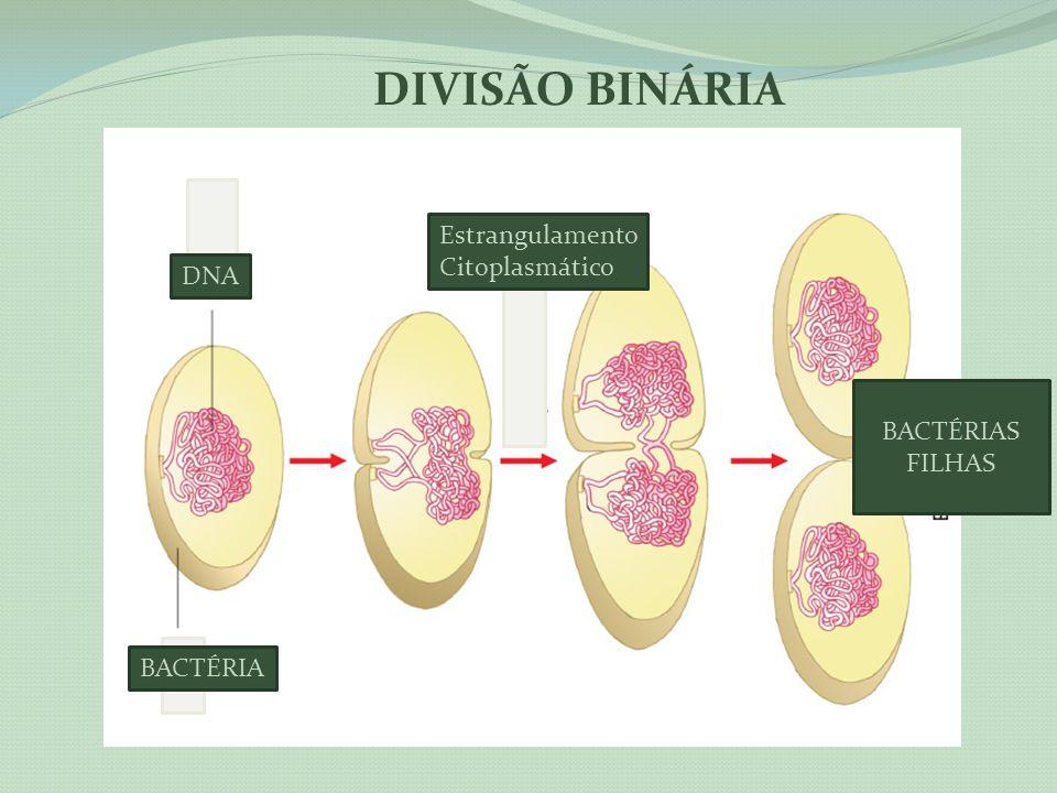 DIVISÃO BINÁRIA Estrangulamento Citoplasmático DNA BACTÉRIAS FILHAS