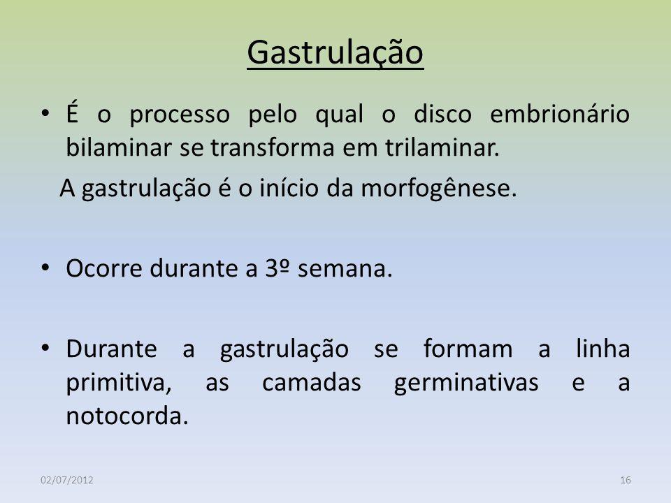 Gastrulação É o processo pelo qual o disco embrionário bilaminar se transforma em trilaminar. A gastrulação é o início da morfogênese.