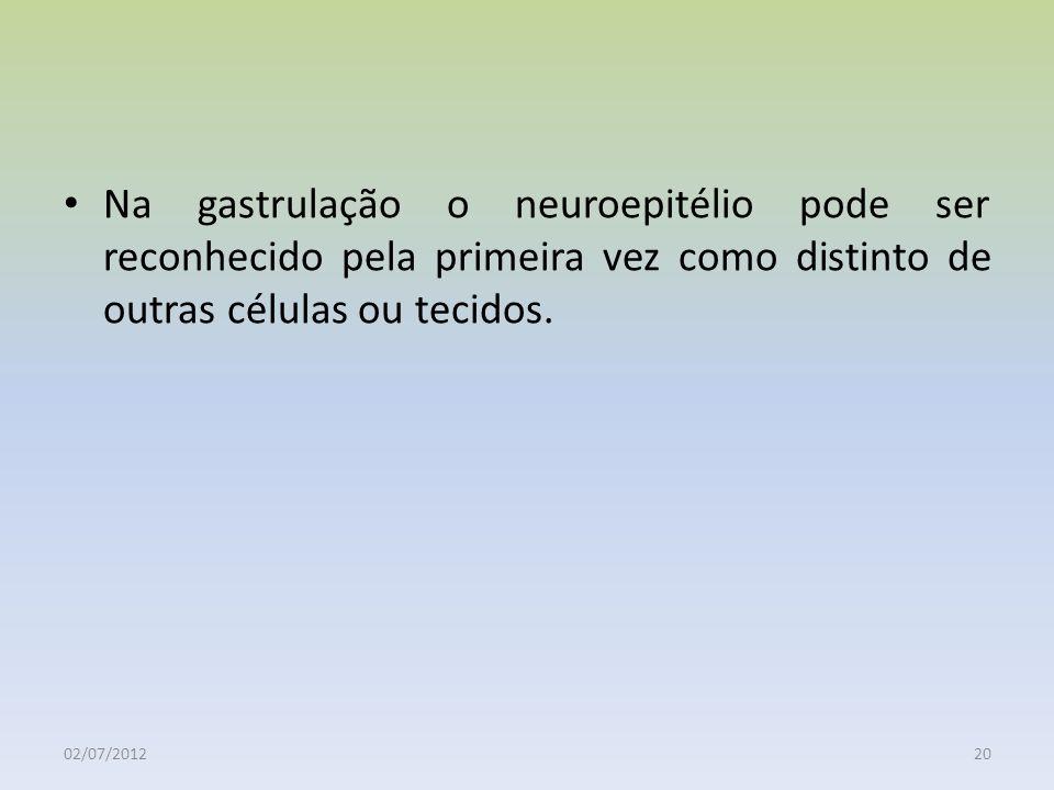 Na gastrulação o neuroepitélio pode ser reconhecido pela primeira vez como distinto de outras células ou tecidos.