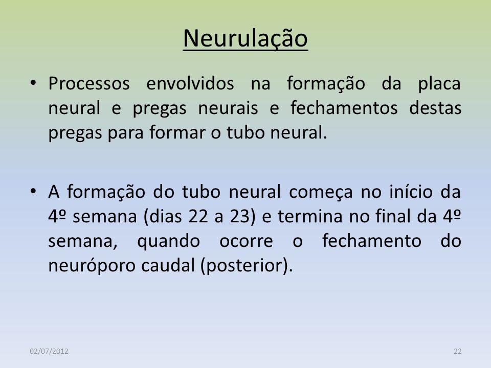 Neurulação Processos envolvidos na formação da placa neural e pregas neurais e fechamentos destas pregas para formar o tubo neural.