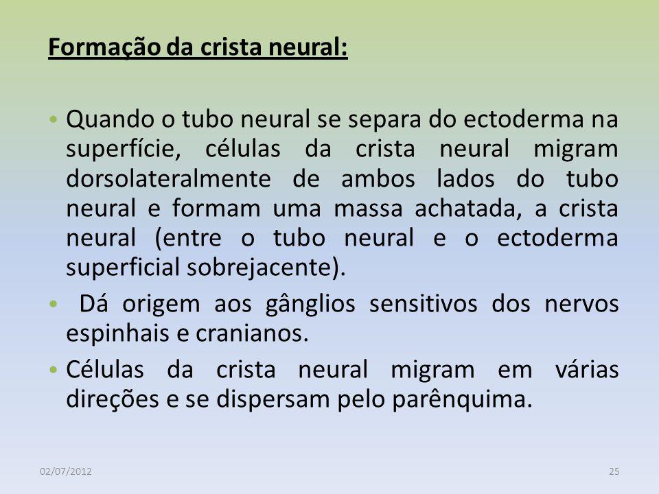 Formação da crista neural: