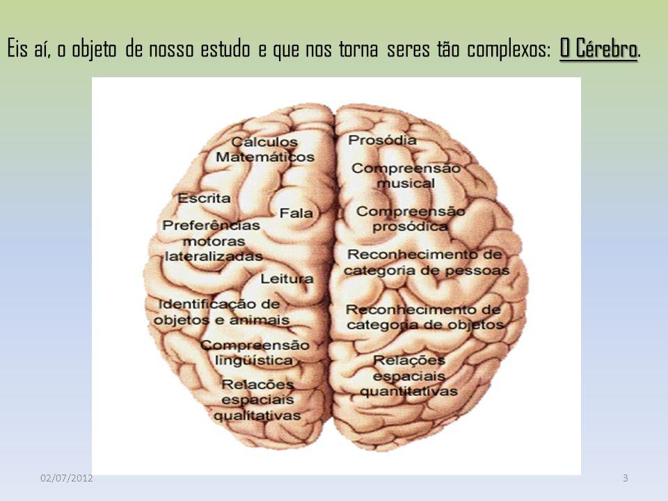 Eis aí, o objeto de nosso estudo e que nos torna seres tão complexos: O Cérebro.