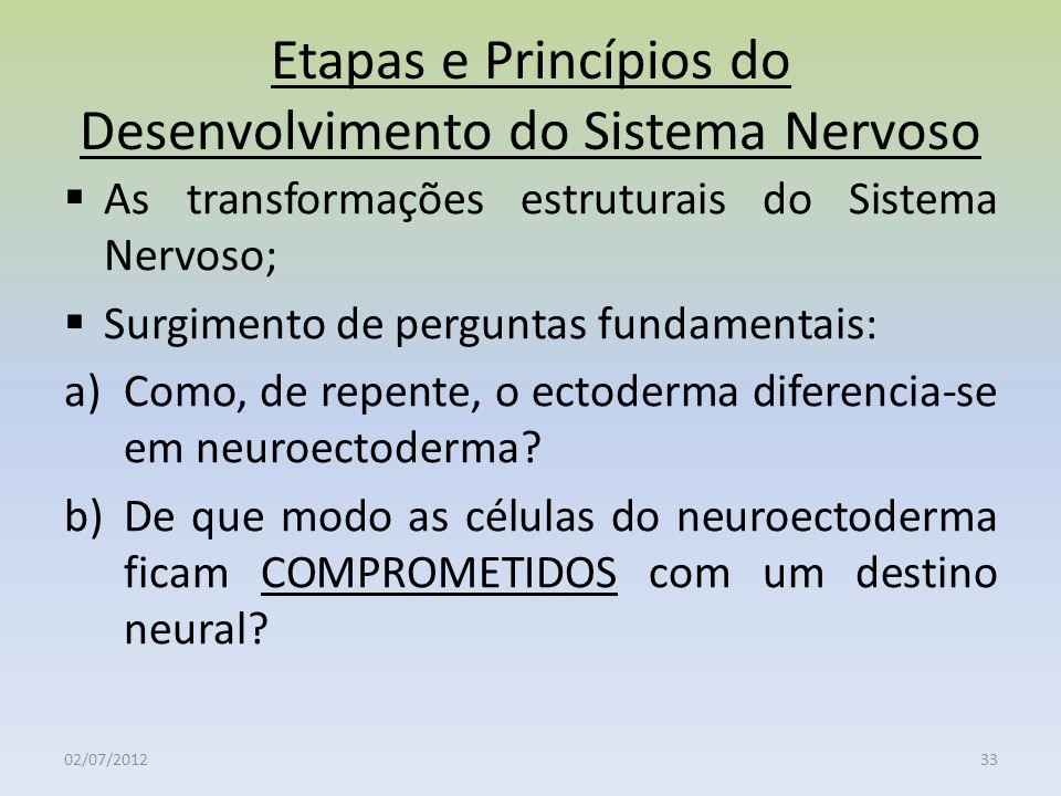 Etapas e Princípios do Desenvolvimento do Sistema Nervoso