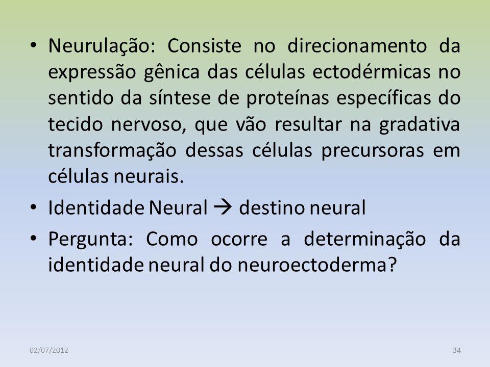 Identidade Neural  destino neural