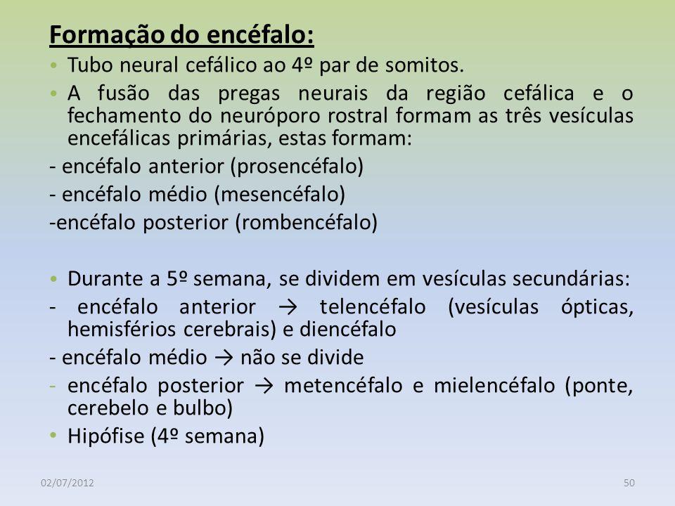 Formação do encéfalo: Tubo neural cefálico ao 4º par de somitos.