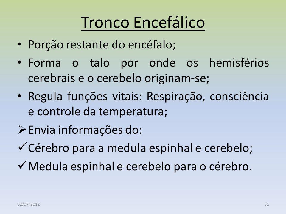 Tronco Encefálico Porção restante do encéfalo;