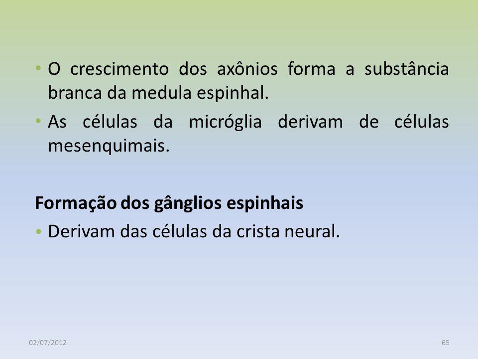 As células da micróglia derivam de células mesenquimais.