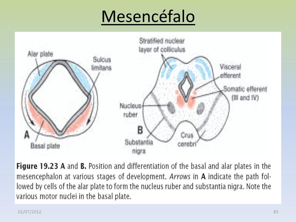 Mesencéfalo 02/07/2012