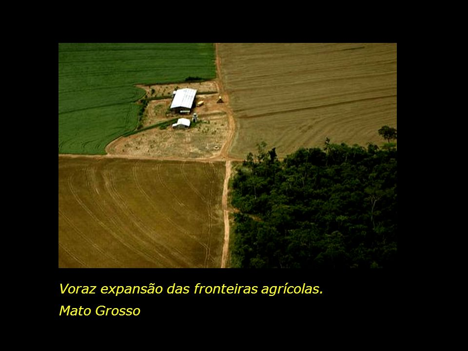 Voraz expansão das fronteiras agrícolas.