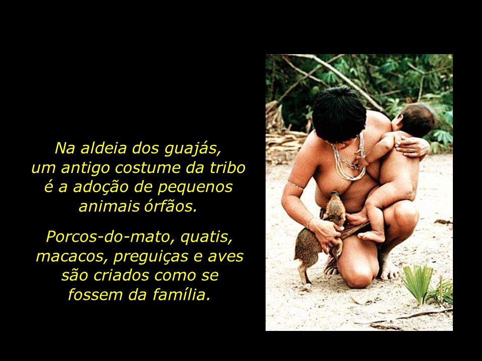 Na aldeia dos guajás, um antigo costume da tribo é a adoção de pequenos animais órfãos.