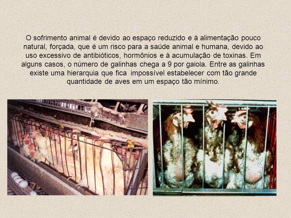O sofrimento animal é devido ao espaço reduzido e à alimentação pouco natural, forçada, que é um risco para a saúde animal e humana, devido ao uso excessivo de antibióticos, hormônios e à acumulação de toxinas.