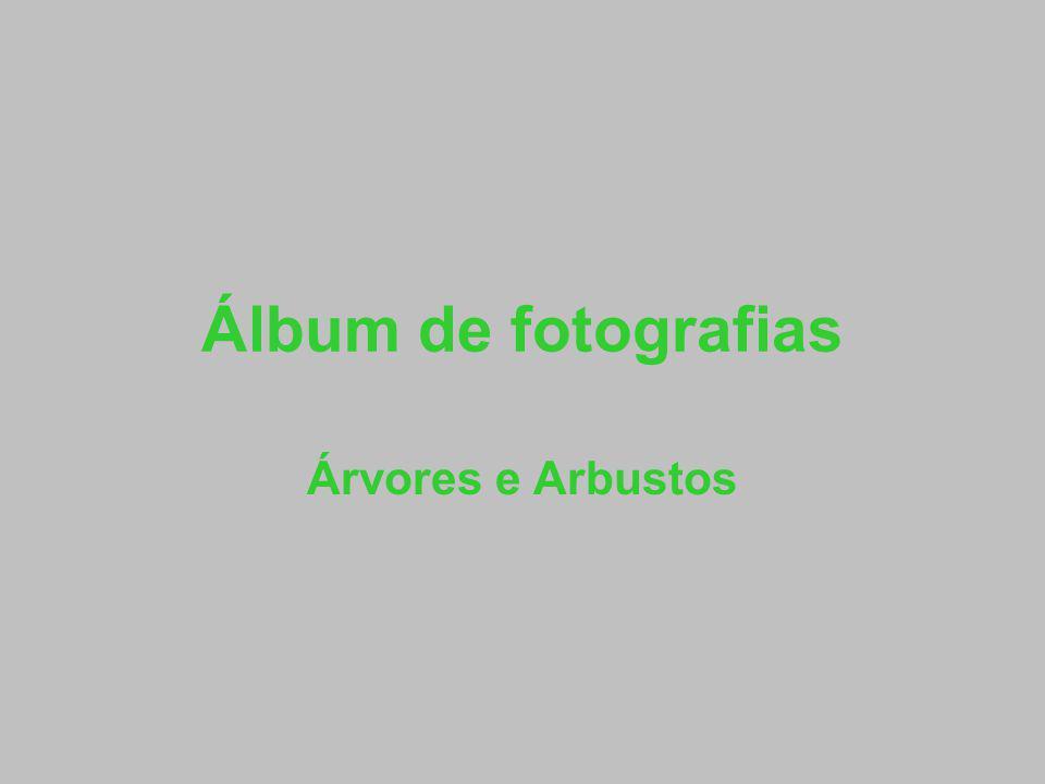 Álbum de fotografias Árvores e Arbustos