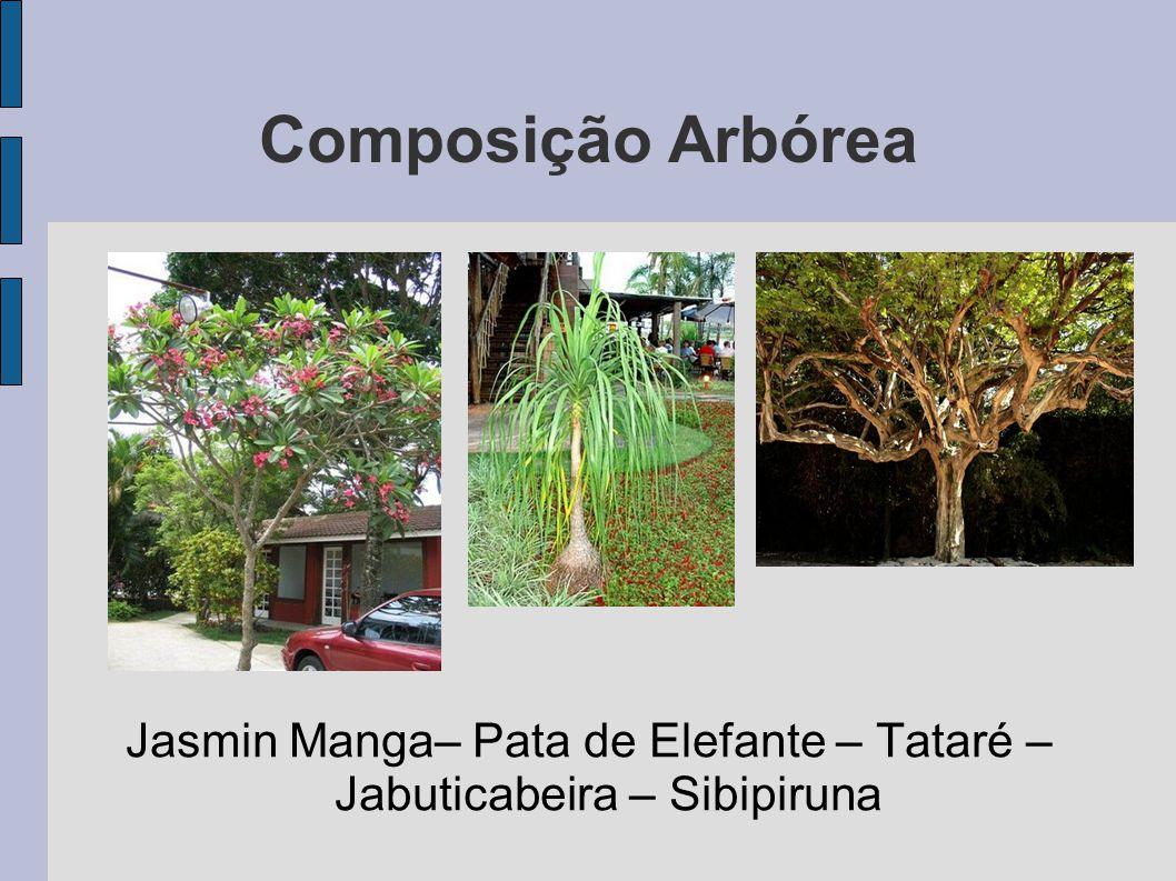 Jasmin Manga– Pata de Elefante – Tataré – Jabuticabeira – Sibipiruna