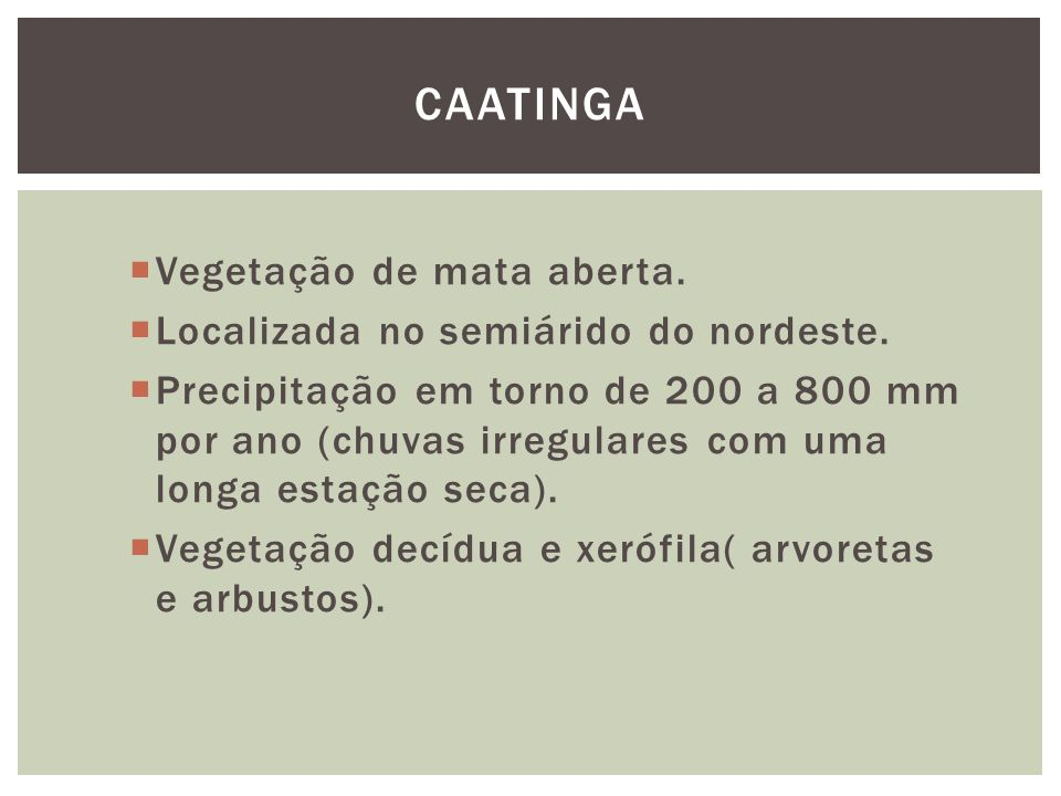 Caatinga Vegetação de mata aberta.