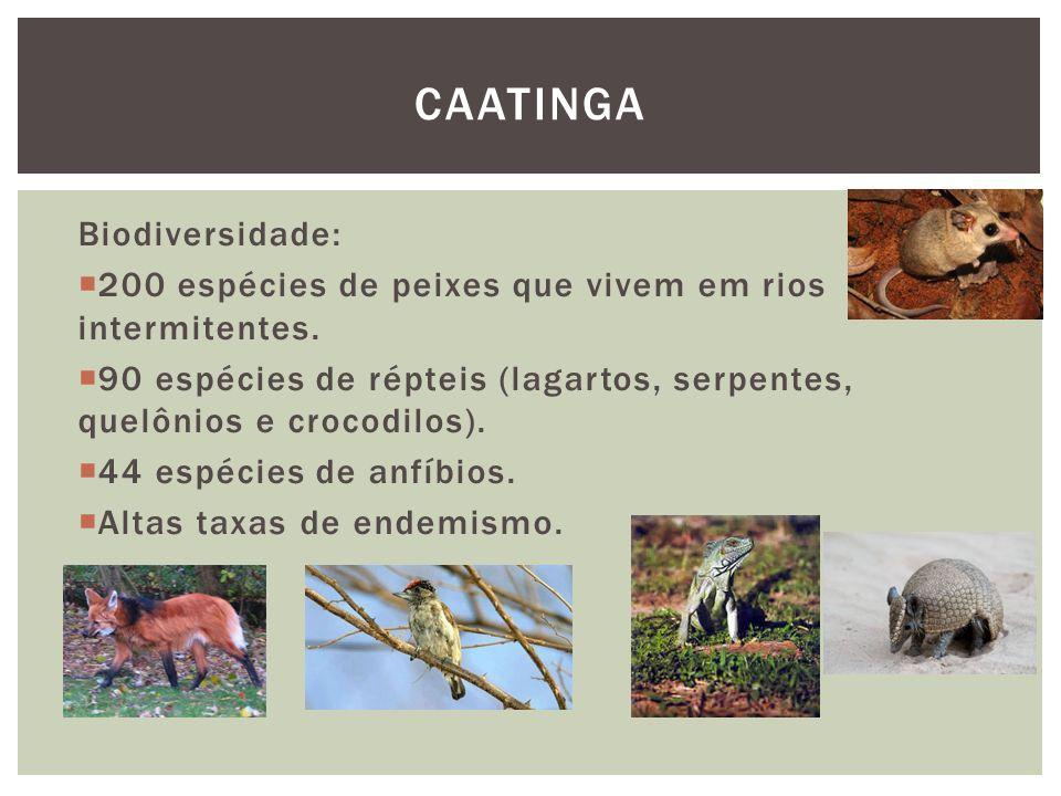 Caatinga Biodiversidade: