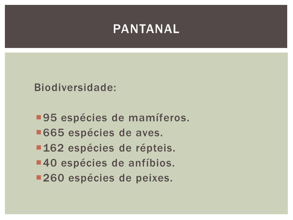 Pantanal Biodiversidade: 95 espécies de mamíferos.