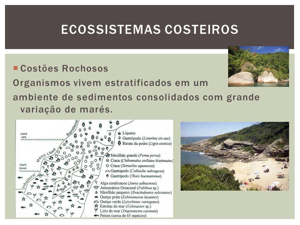 Ecossistemas costeiros