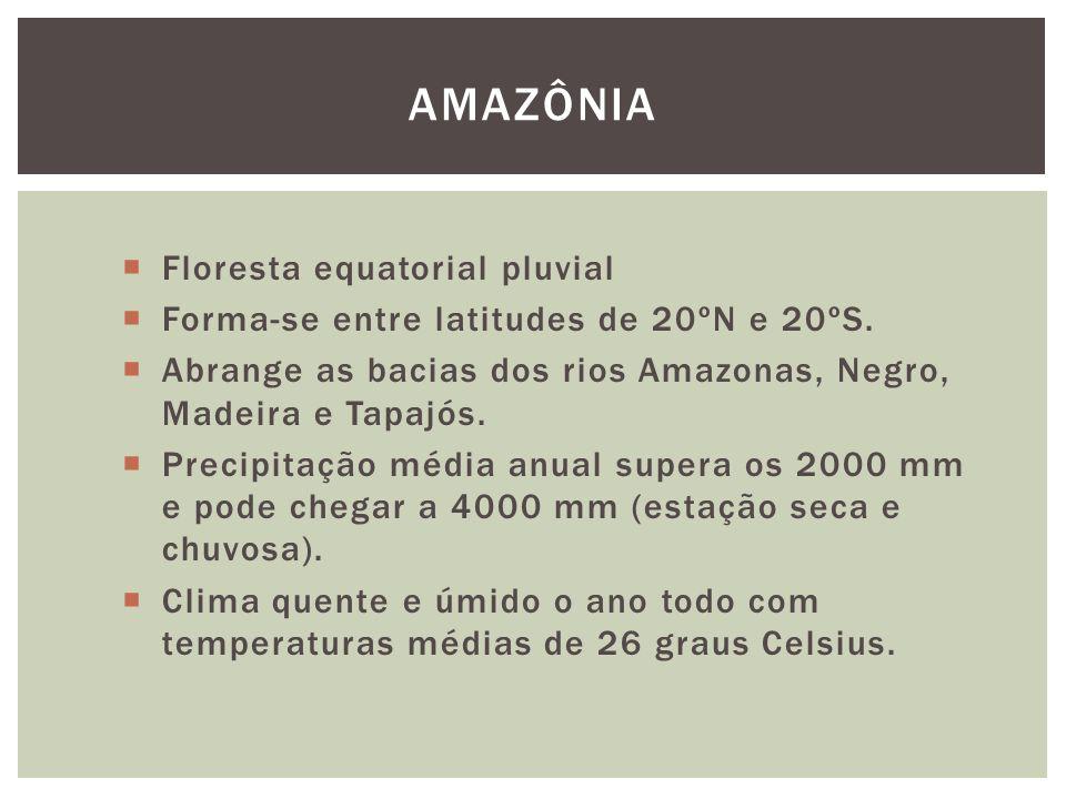 AMAZÔNIA Floresta equatorial pluvial