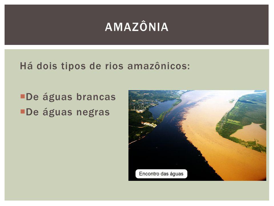 AMAZÔNIA Há dois tipos de rios amazônicos: De águas brancas