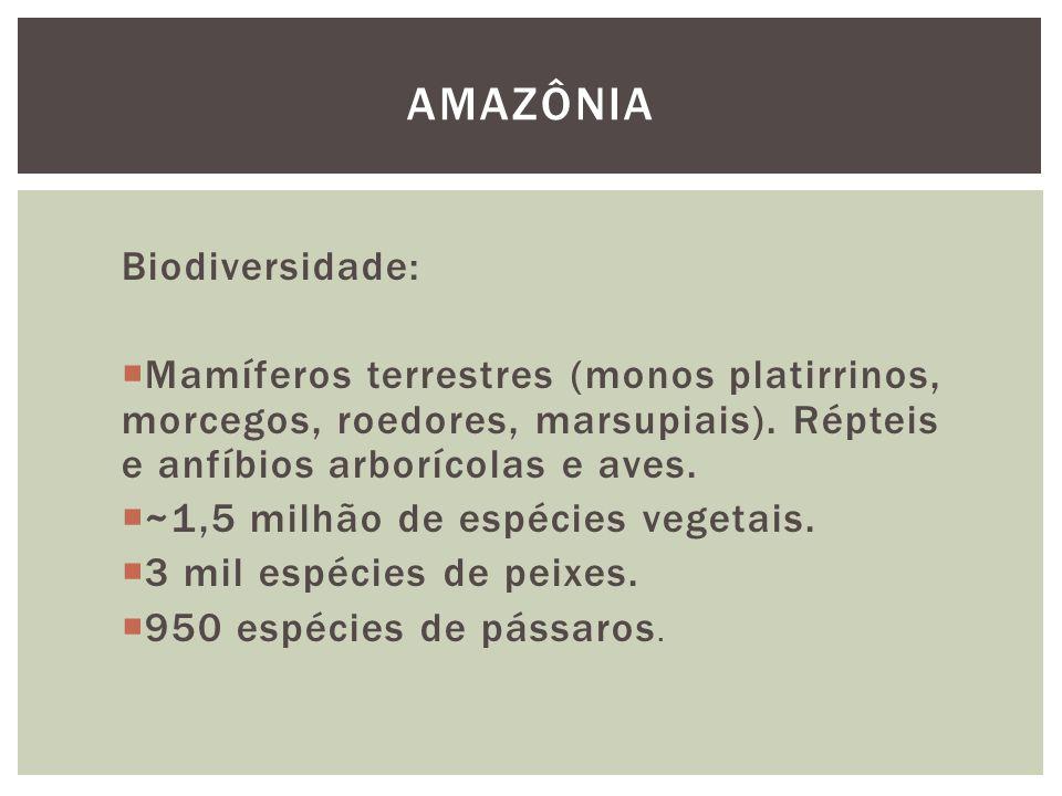 AMAZÔNIA Biodiversidade: