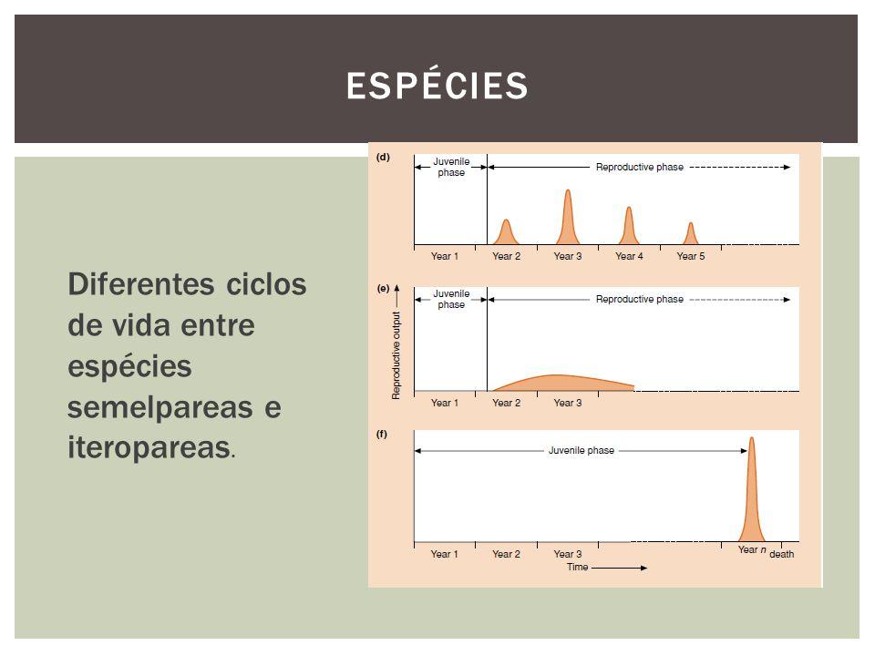 Espécies Diferentes ciclos de vida entre espécies semelpareas e iteropareas.