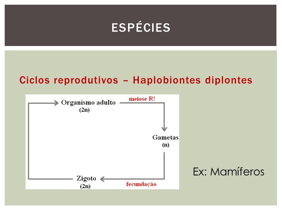 Espécies Ciclos reprodutivos – Haplobiontes diplontes Ex: Mamíferos