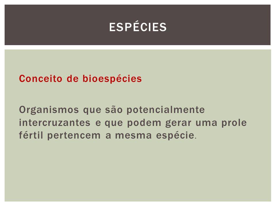 Espécies Conceito de bioespécies Organismos que são potencialmente intercruzantes e que podem gerar uma prole fértil pertencem a mesma espécie.