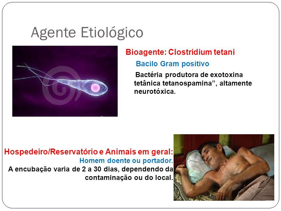 Agente Etiológico Bioagente: Clostridium tetani