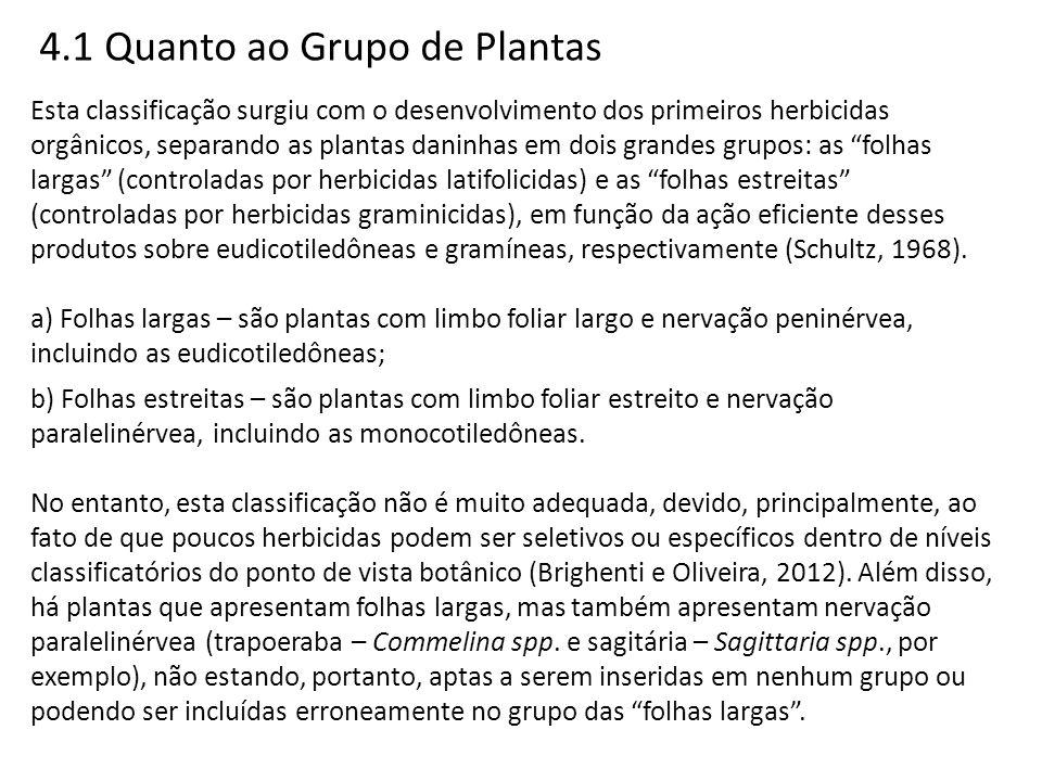4.1 Quanto ao Grupo de Plantas