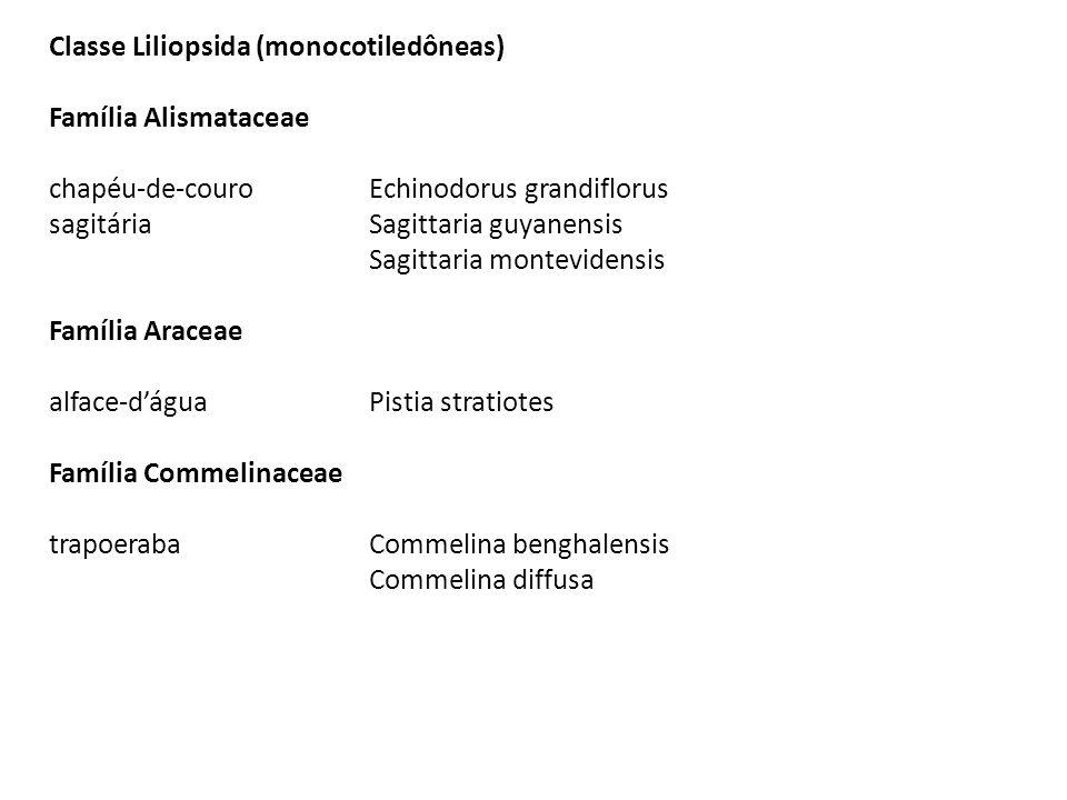 Classe Liliopsida (monocotiledôneas)