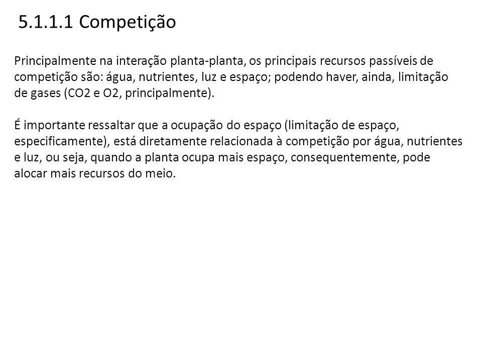 5.1.1.1 Competição