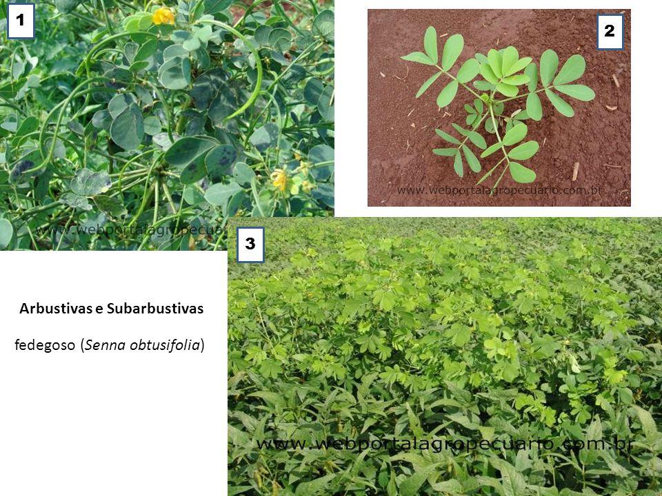 1 2 3 Arbustivas e Subarbustivas fedegoso (Senna obtusifolia)