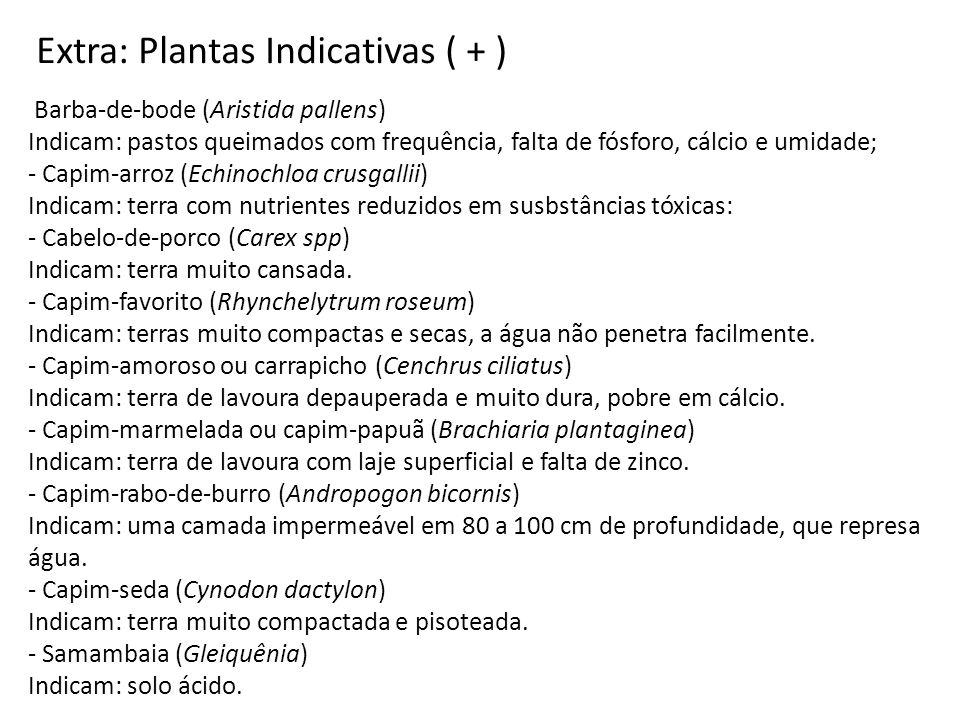 Extra: Plantas Indicativas ( + )