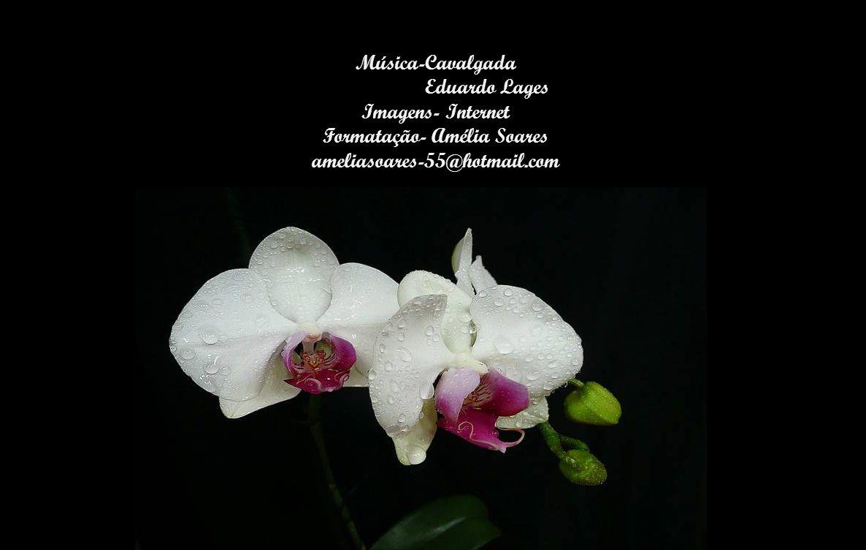 Música-Cavalgada Eduardo Lages Imagens- Internet Formatação- Amélia Soares ameliasoares-55@hotmail.com