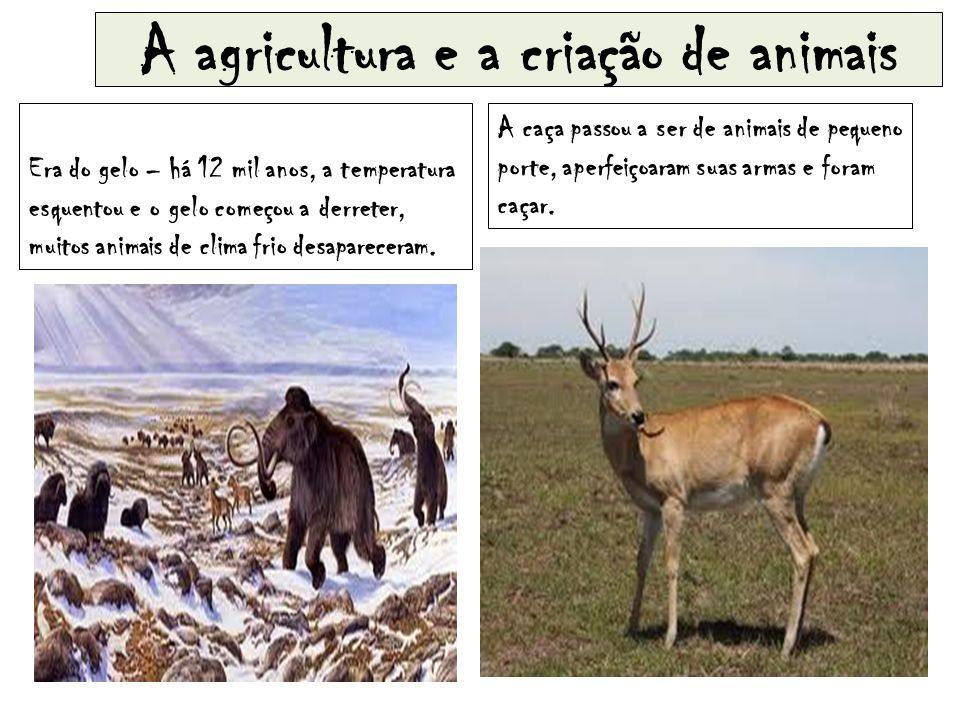 A agricultura e a criação de animais