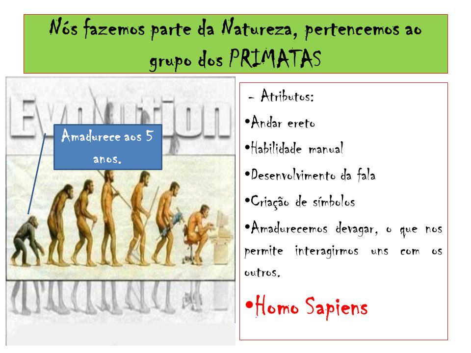 Nós fazemos parte da Natureza, pertencemos ao grupo dos PRIMATAS