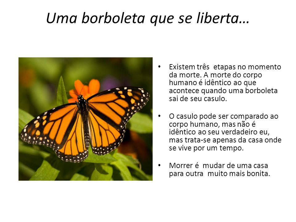 Uma borboleta que se liberta…
