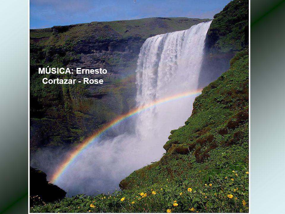 MÚSICA: Ernesto Cortazar - Rose