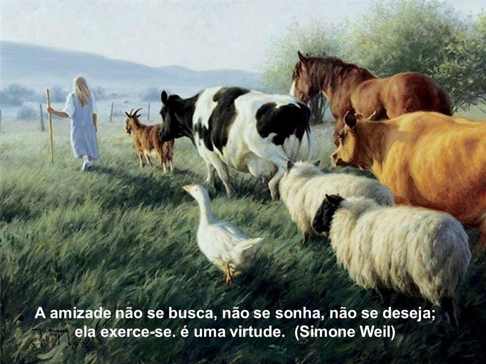 A amizade não se busca, não se sonha, não se deseja; ela exerce-se