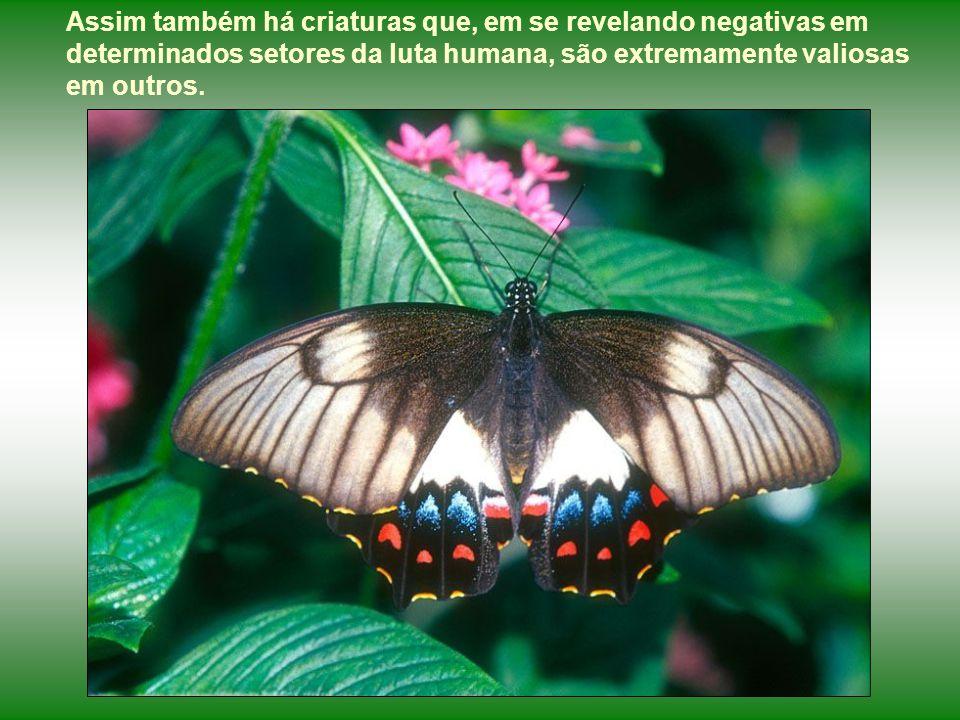 Assim também há criaturas que, em se revelando negativas em determinados setores da luta humana, são extremamente valiosas