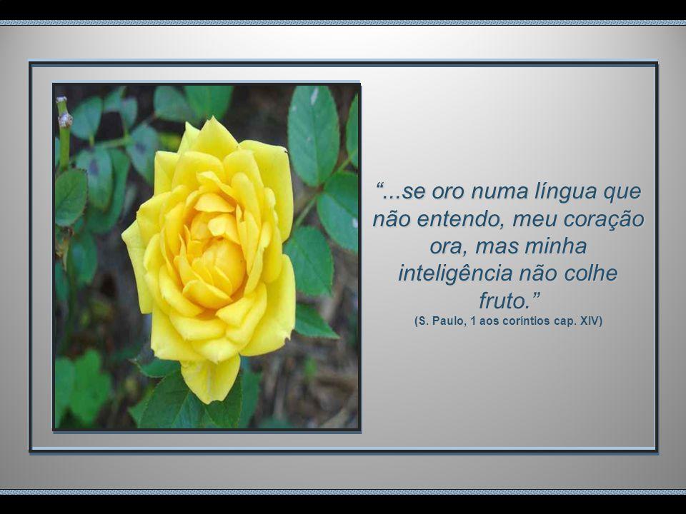 ...se oro numa língua que não entendo, meu coração ora, mas minha inteligência não colhe fruto. (S.