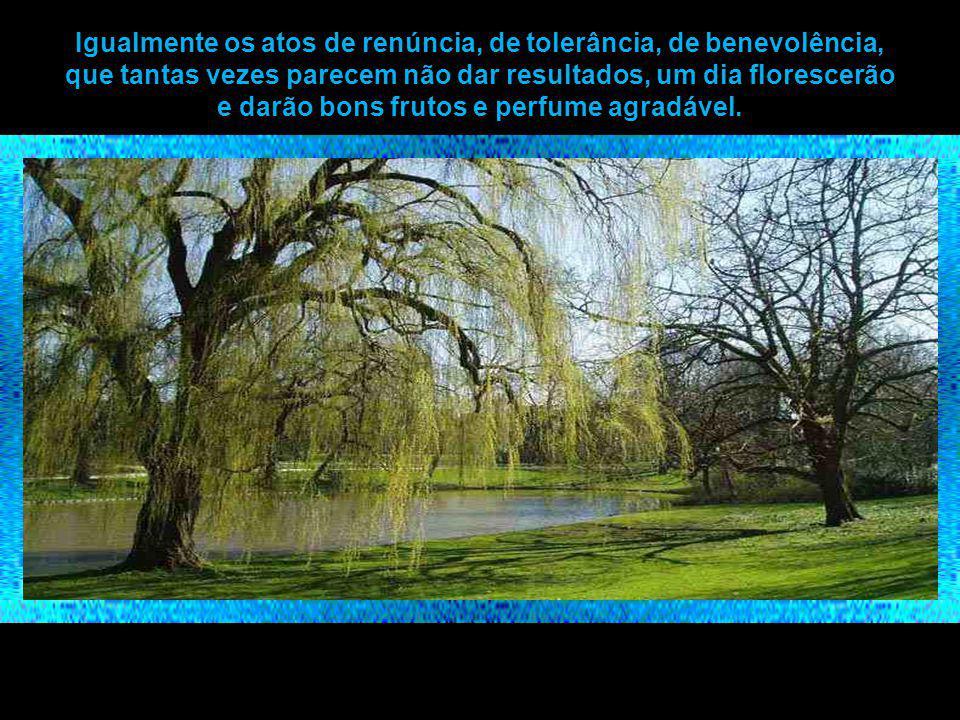 Igualmente os atos de renúncia, de tolerância, de benevolência, que tantas vezes parecem não dar resultados, um dia florescerão e darão bons frutos e perfume agradável.