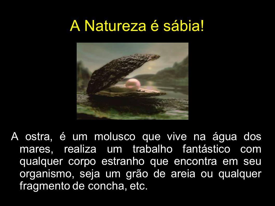 A Natureza é sábia!