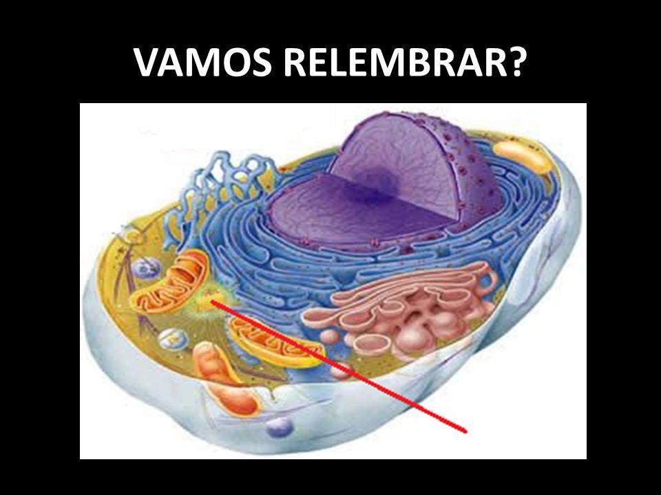 VAMOS RELEMBRAR