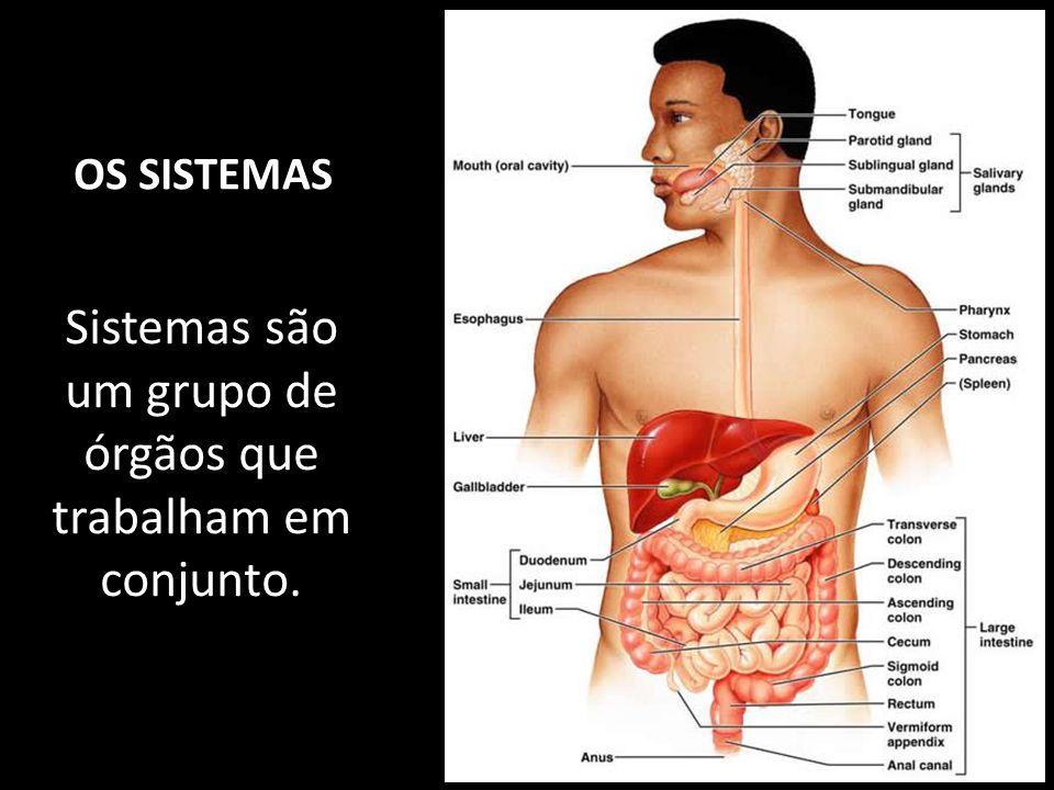 Sistemas são um grupo de órgãos que trabalham em conjunto.