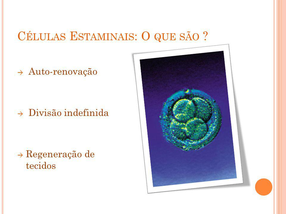 Células Estaminais: O que são
