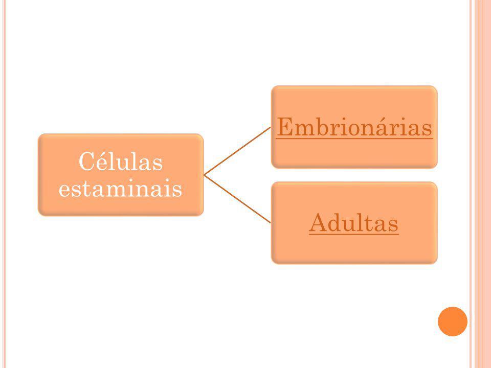 Células estaminais Embrionárias Adultas